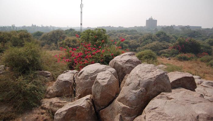 Parthasarathy Rock